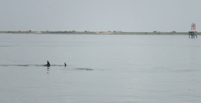 Dolphins_690x355