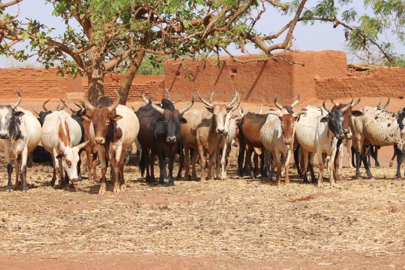 Mali Livestock for Growth (L4G)